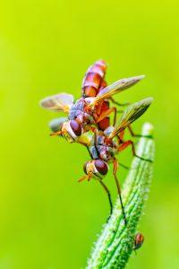 alergias y picaduras de insectos