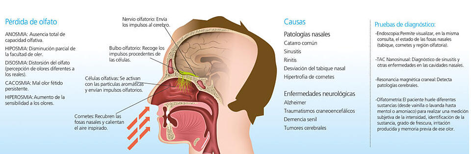 anosmia-imq-dr-urcelay