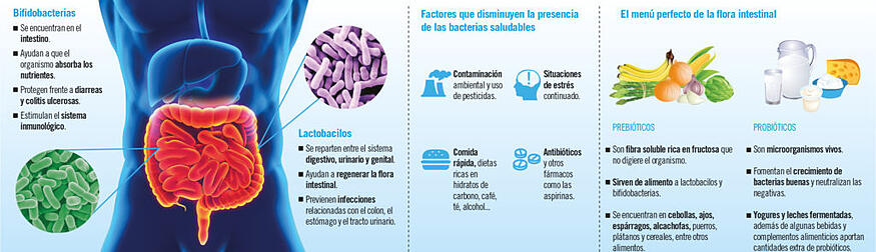bacterias beneficiosas para el organismo canal salud imq