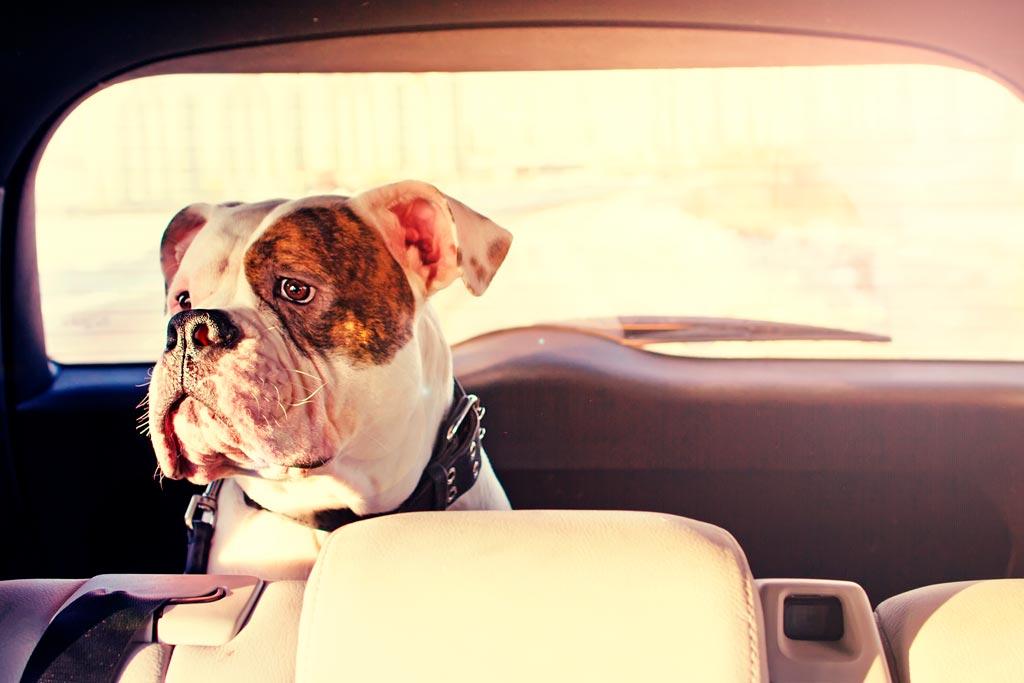 Escapadas dog-friendly: de vacaciones con mi perro