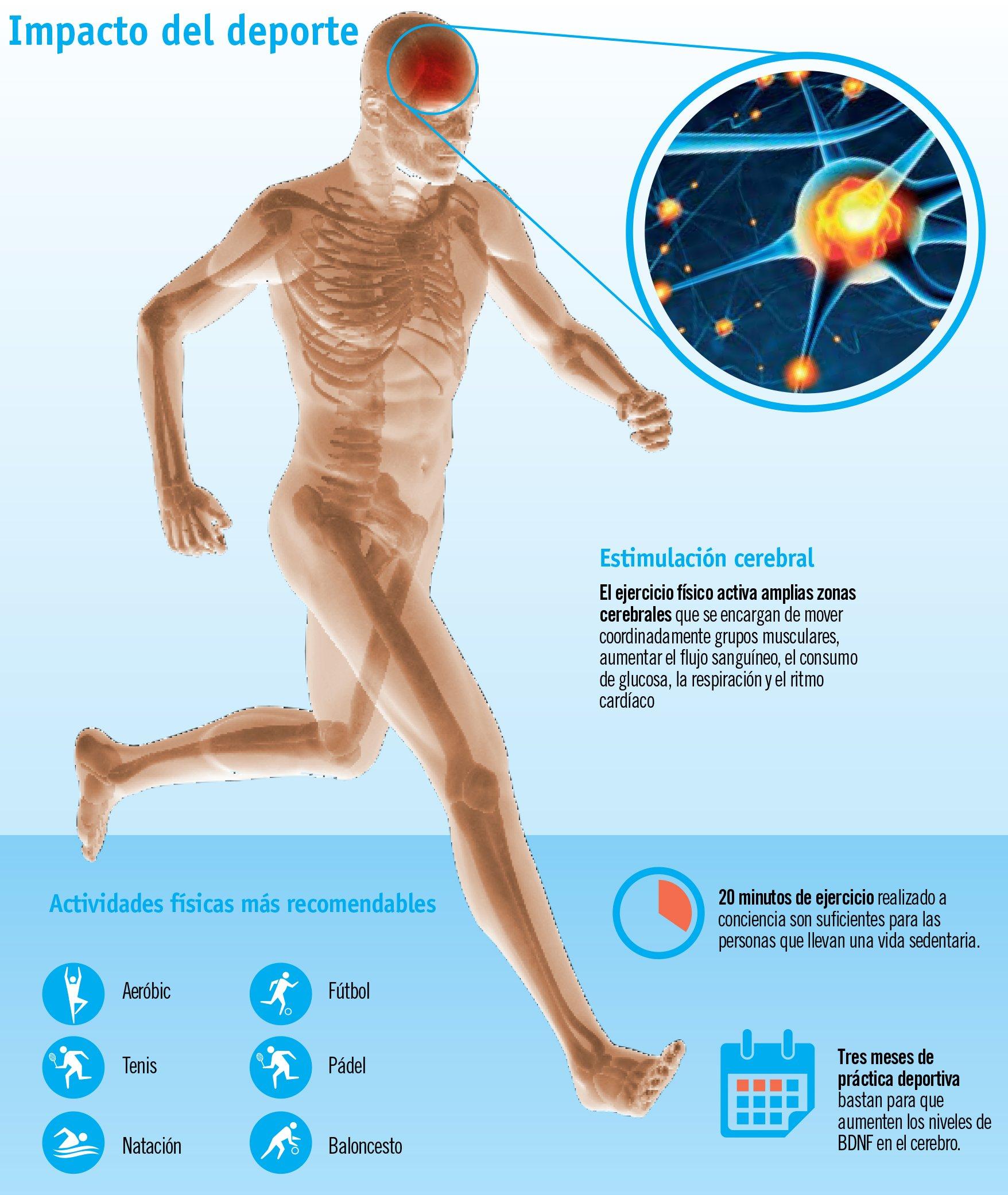 El ejercicio físico también pone en forma al cerebro
