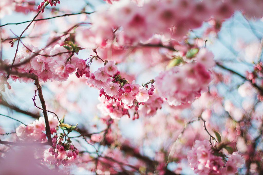 Alergias: la primavera, el sistema inmunitario altera