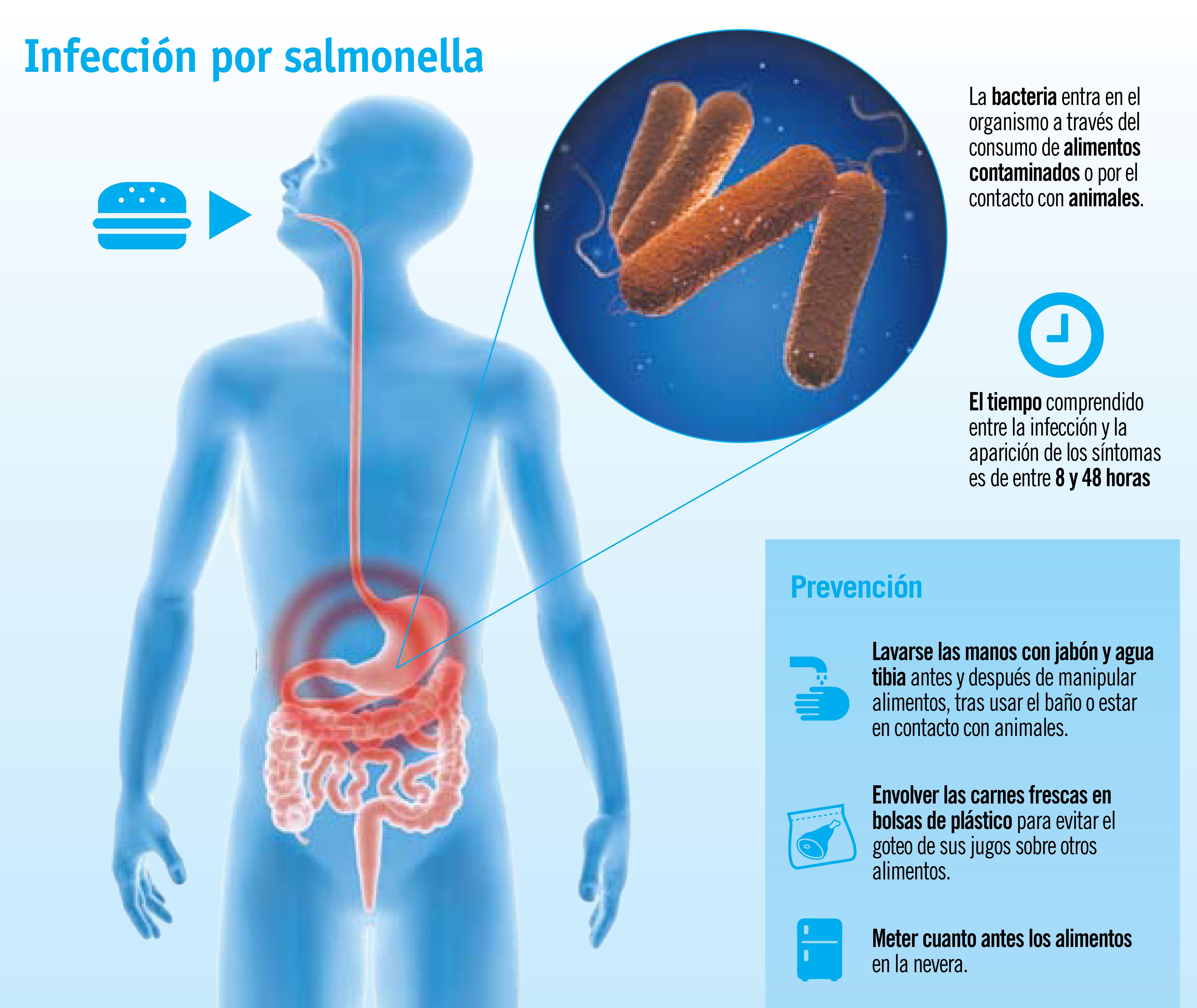 Salmonelosis: una intoxicación típica de verano