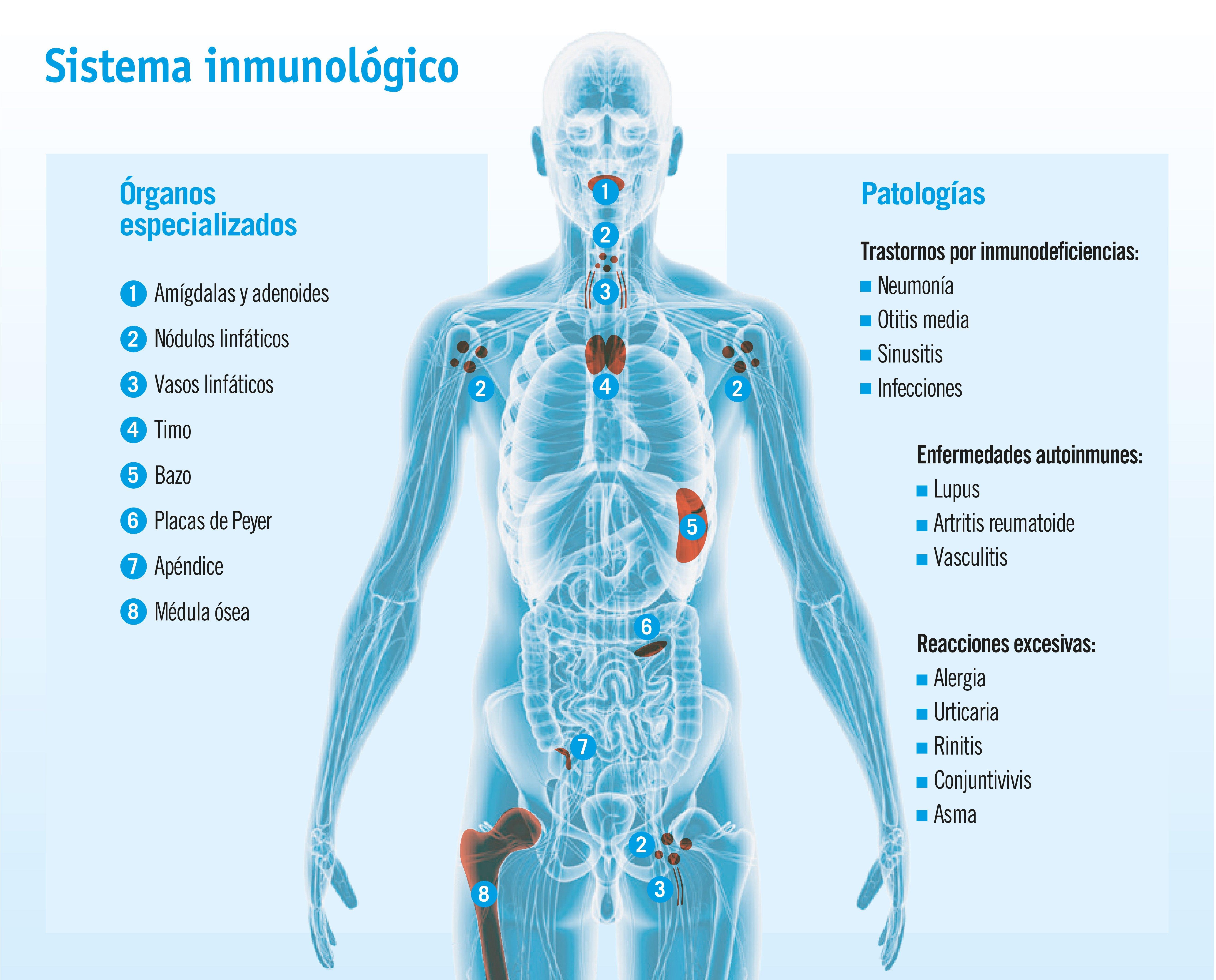 Cuando falla el sistema inmunitario